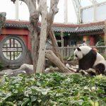 【香港】「オーシャンパーク」はパンダ鑑賞の超穴場。極近で観察できます!