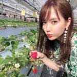 【岡山・鏡野町】イチゴ狩りが旬。「山田みつばち農園」に行ってきました!